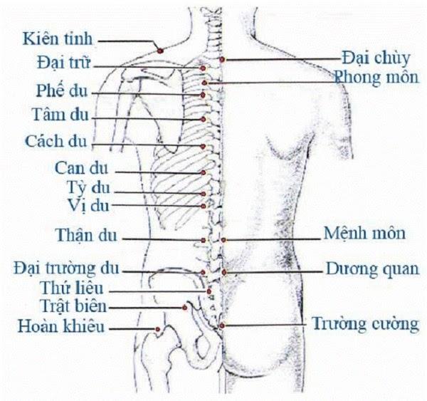 Huyệt đạo ở phần lưng, eo và mông