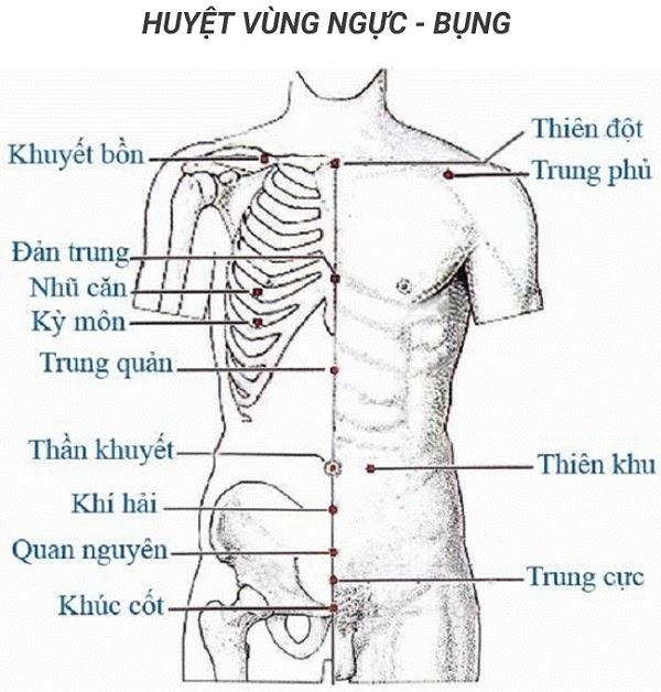 Các huyệt vùng bụng, ngực