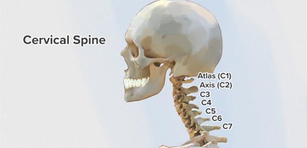 Khi giải phẫu cột sống cổ, bạn sẽ thấy có 7 đốt, ký hiệu từ C1 đến C7